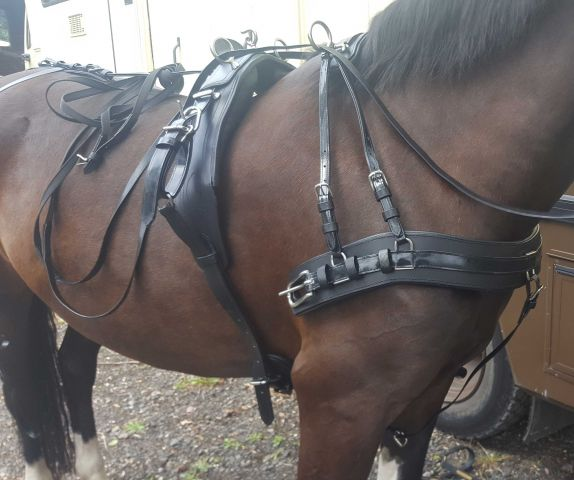 Webster Elite Harness